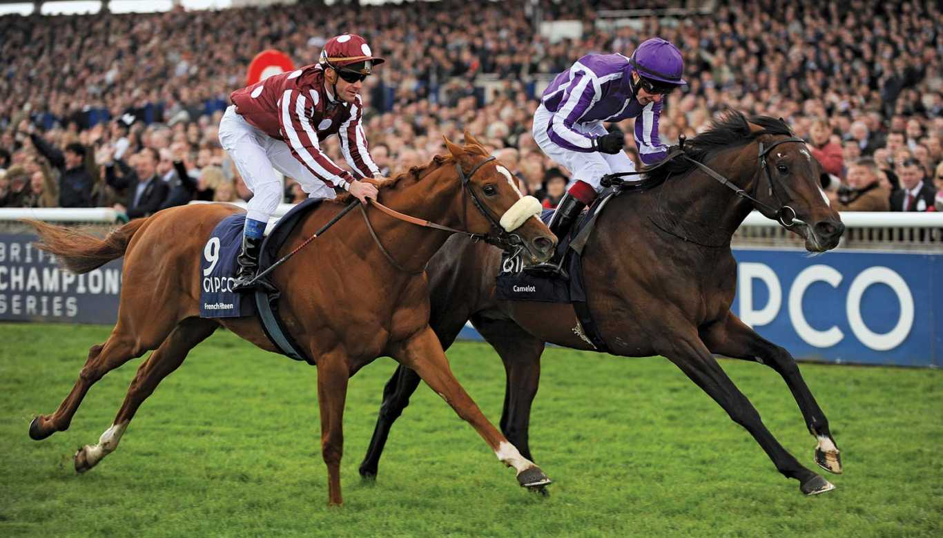 1xBet horse racing